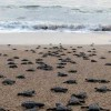 Sea Turtle Protection Projects
