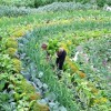PDC – Permaculture Design Certificate