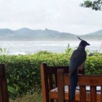 Tamarindo Beach: A Costa Rican Piece of Paradise