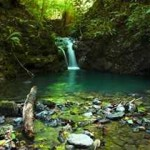 Osa Peninsula: Nature's Pride in Costa Rica