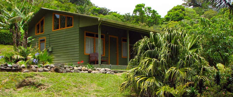 Cloud-forest-lodge